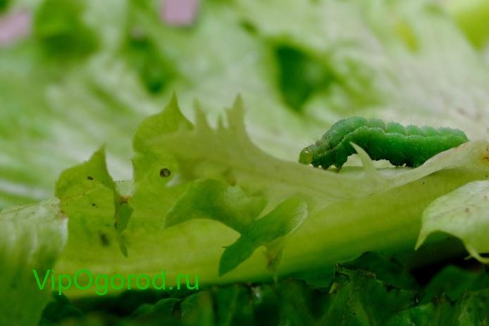 Как определить вредителей сада по ущербу который они причиняют