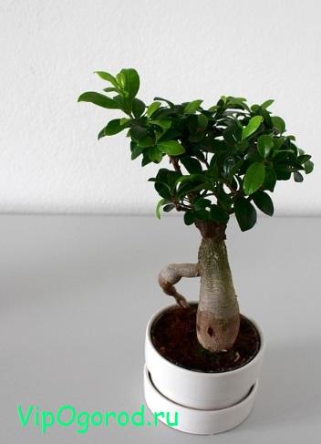Продажа комнатных растений - от мала до велика