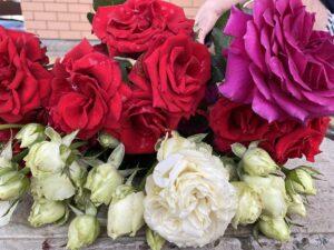 когда нужно сажать розы осенью