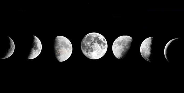 сажаем саженцы по лунному календарю