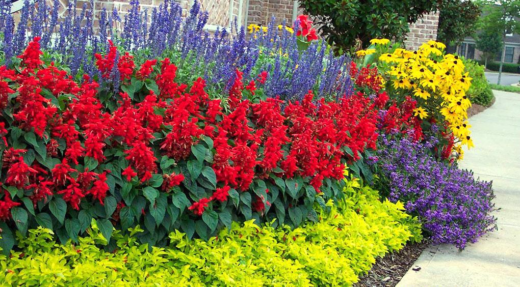 цветы которые цветут все лето многолетние