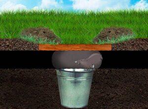 Как избавиться от кротов на участке при помощи воды