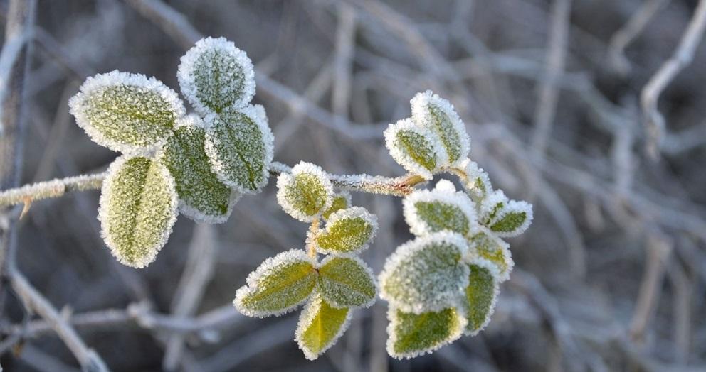 заморозки и растения