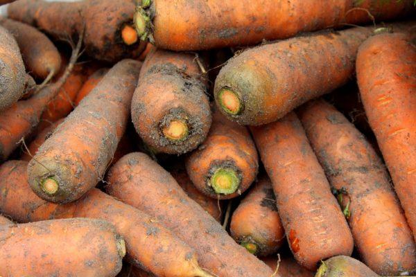 обрезаем морковь на хранение