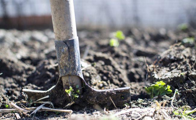 Что нужно делать с почвой осенью на даче