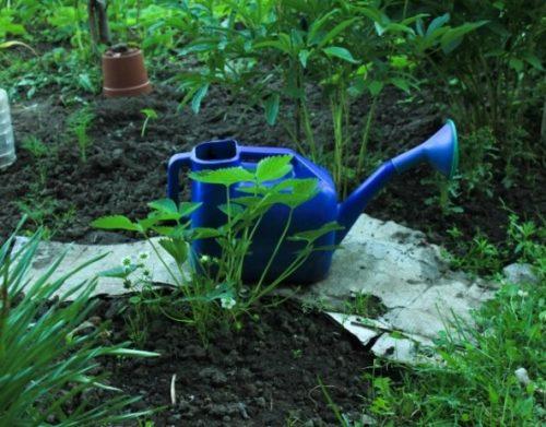 как правильно расположить огород на участке