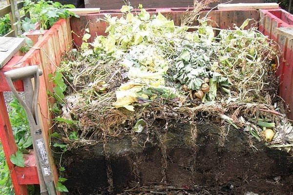 Складываем ботву, сорняки и падалицу, в компост или в грядку?