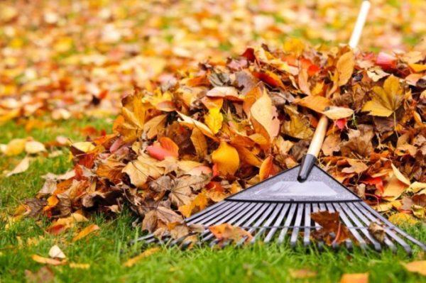 опавшие листья осенью