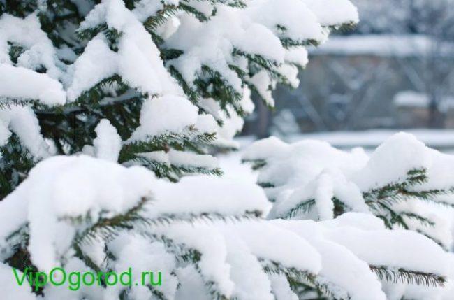 народные приметы зимы в России