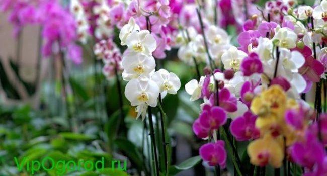 орхидея как правильно выбрать