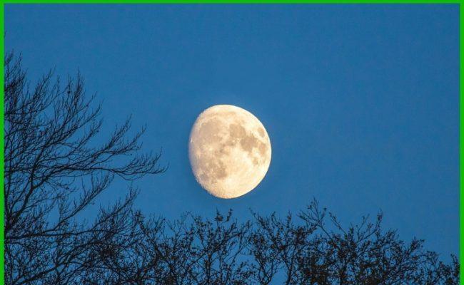 Лунный календарь 2021: благоприятные дни посева семян на рассаду