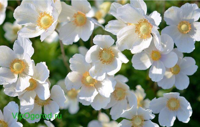 цветы на рассаду