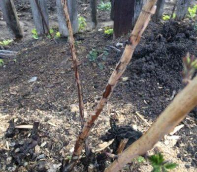Весченняя обработка сада от вредителей