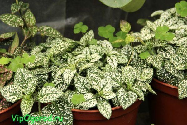 Продажа комнатных растений: от мала до велика