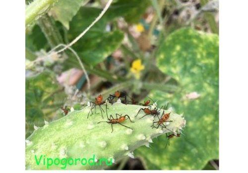 Враги на грядке: защищаем огород от насекомых-вредителей