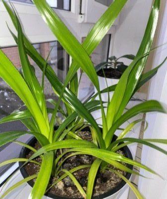 Комнатные растения очищают воздух