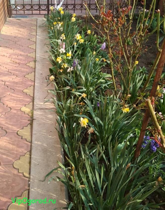 10 секретов урожайного сада и огорода в вопросах и ответах