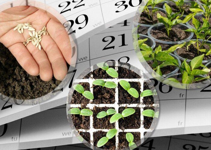 что посадить в апреле на рассаду