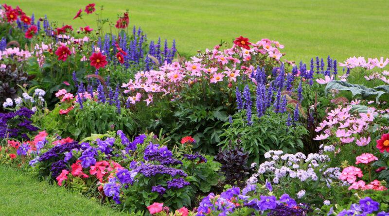 многолетние цветы цветущие все лето
